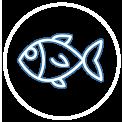 impianti di refrigerazione industriale settore ittico - impianti frigoriferi industriali per il pesce