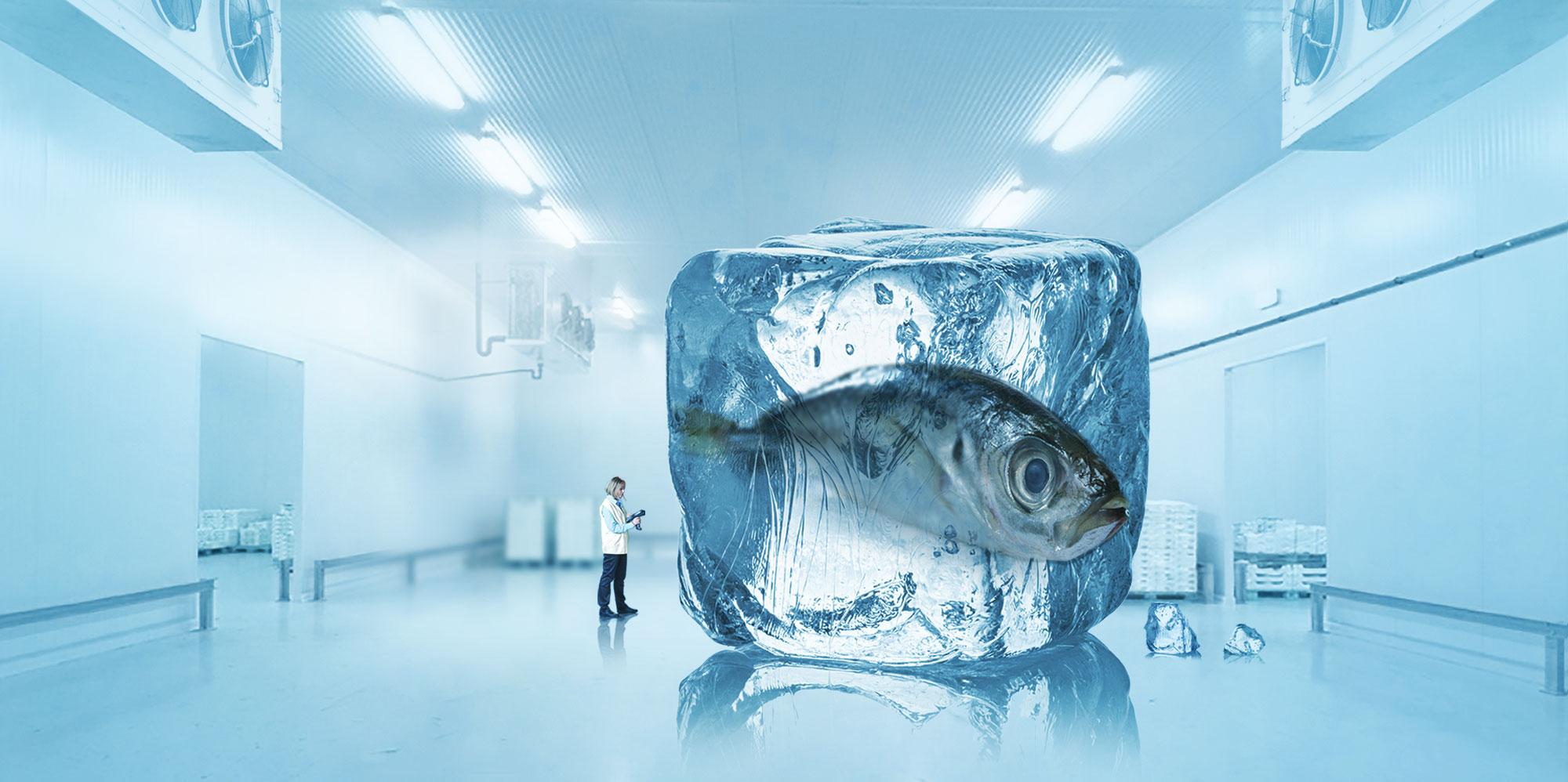 Impianti di refrigerazione industriale - impianti frigoriferi industriali impianto frigorifero - cella